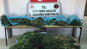 Şanlıurfa'da uyuşturucuya geçit yok