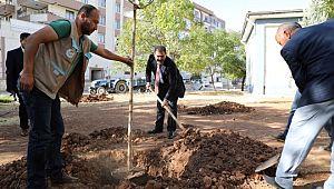 Başkan Canpolat'la ağaçlar toprakla buluşuyor