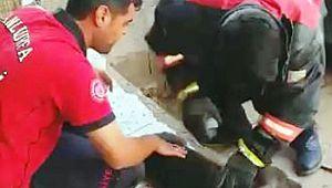 Otomobilde sıkışan köpek kurtarıldı