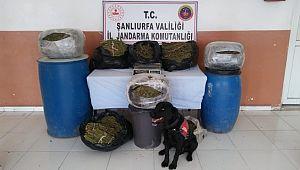 Şanlıurfa'da 105 kilo esrar ele geçirildi