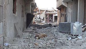 Suruç'ta Havanlı Saldırı Muhtar Şehit Oldu