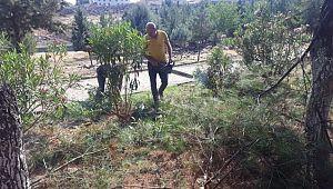 Viranşehir'de Ağaç Bakımı