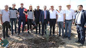 """Haliliye Belediyesinden """"Milli Ağaçlandırma Gününe"""" destek"""