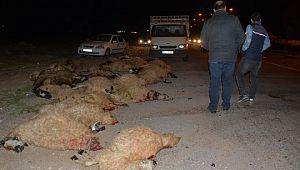 Otomobil koyun sürüsüne çarptı: 40 koyun telef oldu