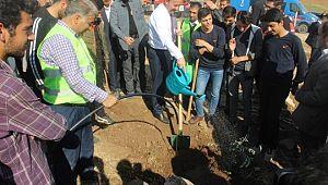 Şanlıurfa'da 'geleceğe nefes' için on binlerce ağaç dikildi