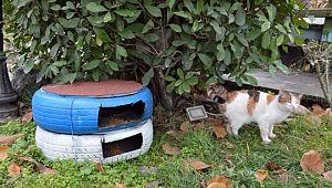 Otomobil lastikleri kediler için sıcak yuvaya dönüştürüldü