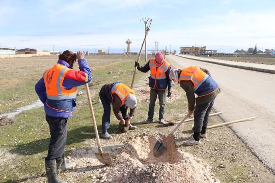 Akçakale Gümrük yolu Sudkom tarafından ağaçlandırılıyor (Videolu Haber)