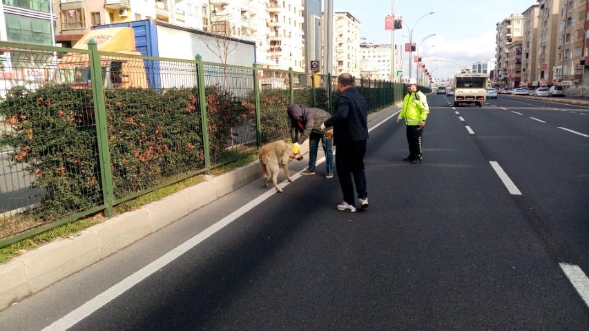 Refüjde mahsur kalan köpeğin yardımına polis koştu