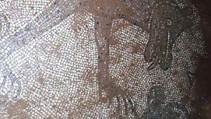 Şanlıurfa´da izinsiz kazıda Roma dönemine ait mozaikler ortaya çıktı