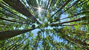 Türkiye'nin yüzde 29'u ormanlarla kaplı