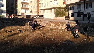 Viranşehir belediyesinde sabah mıntıka temizliği