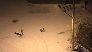 Şanlıurfa'da hamile ve engellilere kar tatili