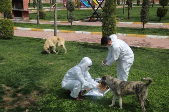Şanlıurfa'da sokak hayvanları unutulmadı (Videolu Haber)