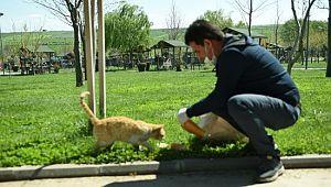 Elleriyle sokak hayvanlarını beslediler