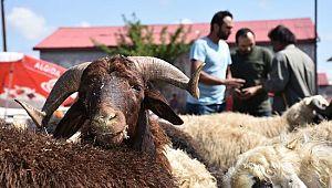 Hayvan pazarında el sıkışarak anlaşmak yasaklandı