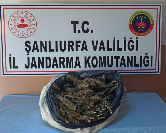 Şanlıurfa'da 10 kilo esrar ele geçirildi