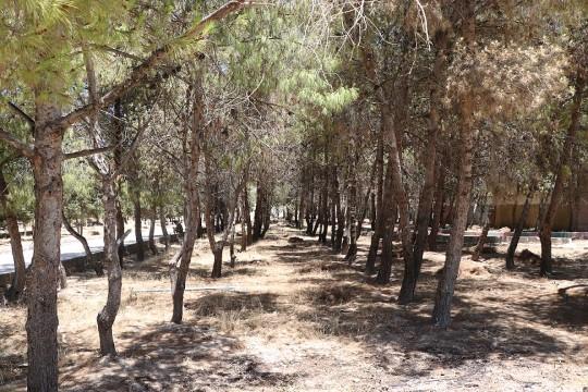 Barış pınarı bölgesinde park ve bahçeler halka açılıyor (Videolu Haber)
