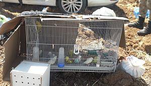 Kazazede kuşlar güneşten kartonla korundu (Videolu Haber)
