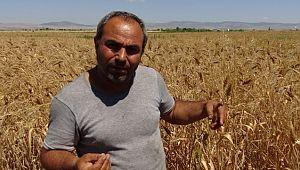 Şanlıurfa'lı Hıdır babasın'dan kalanbir avuç buğdayı çoğaltmaya çalışıyor (Video)