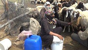 Şanlıurfa'lı yaylacılardan Muş ekonomisine katkı