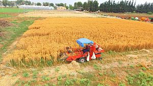 Şanlıurfalı çiftçiler için yeni alternatif ürün geliştirildi (Videolu Haber)