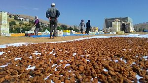 Şanlıurfalılar ekmekleri Kaysıdan topluyor.
