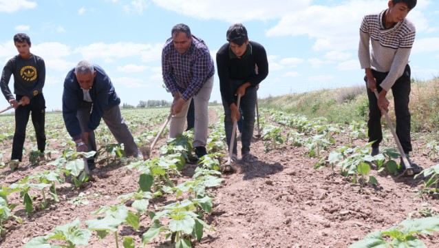 """""""Tarım işçileri olmazsa tarım olmaz"""""""