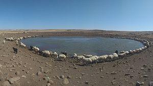 50 derece sıcaklıkta çalışan çobanların zorlu mücadelesi (Videolu Haber)
