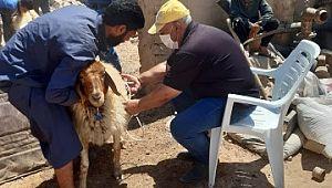 Barış pınarında tarım ve hayvancılık canlandı