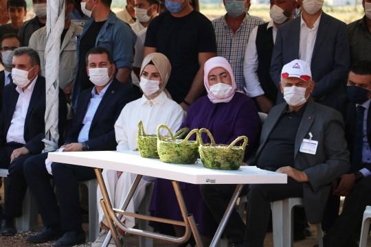 Binali Yıldırım Karaköprü'de fıstık hasadına katıldı (Video)