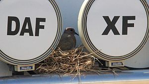 Kuşun yuva yaptığı tır seferden çekildi (Videolu Haber)