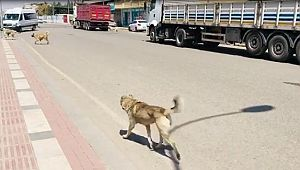 Sokak köpekleri vatandaşları tedirgin ediyor (Video)