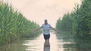 Suruç'ta 5 bin dönüm tarım arazisi sular altında kaldı (Videolu Haber)