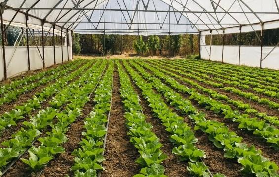 Yeşil gıda seracılıkta kış dönemi ürün çeşitliliği artırıldı