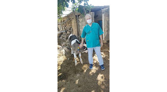 HRÜ Veteriner fakültesi sığırlarda ölümlere yol açan hastalık için aşı çalışmasına başladı