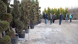 Eyyübiye'deki parklara farklı türlerde yeni ağaçlar dikilecek (Videolu Haber)