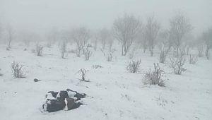 Karacadağ'da yağan kar hayatı olumsuz etkiliyor