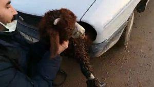 Kuzuları Türkiye'ye geçirmek için otomobil farına koydular (Videolu Haber)