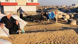 Şanlıurfa'da göçerler mera alanı bulamıyor
