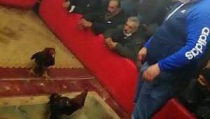 Şanlıurfa'da horoz dövüştürenlere operasyon (Video)