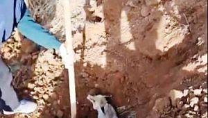 Şanlıurfa'da tilki kurtarma operasyonu