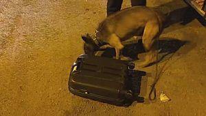 Şanlıurfa'da yolcu valizinden 10 kilo 820 gram esrar çıktı