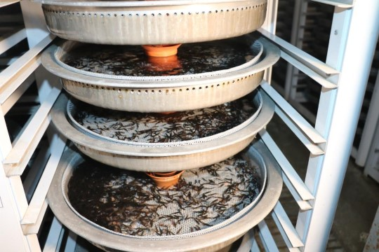 Türkiye'nin balık üretim merkezi: Fırat Nehri (Videolu Haber)