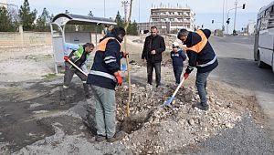 Viranşehir'de ağaçlandırma çalışması