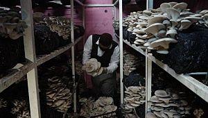 İş yerini kapattı evinin bodrumunda mantar üretmeye başladı (Videolu Haber)
