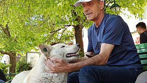 Evcil hayvan sahiplenmenin faydaları saymakla bitmiyor