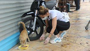 Market arabasıyla sokakları gezip hayvanları beslediler