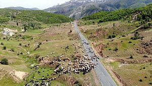 On binlerce hayvanla Muş'a gelen yetiştiriciler hayal kırıklığı yaşadı