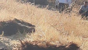 Hafif ticari aracın çarptığı 10 keçi telef oldu