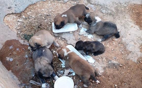 İki duvar arasına sıkışan yavru köpekler kurtarıldı ( Video Haber )